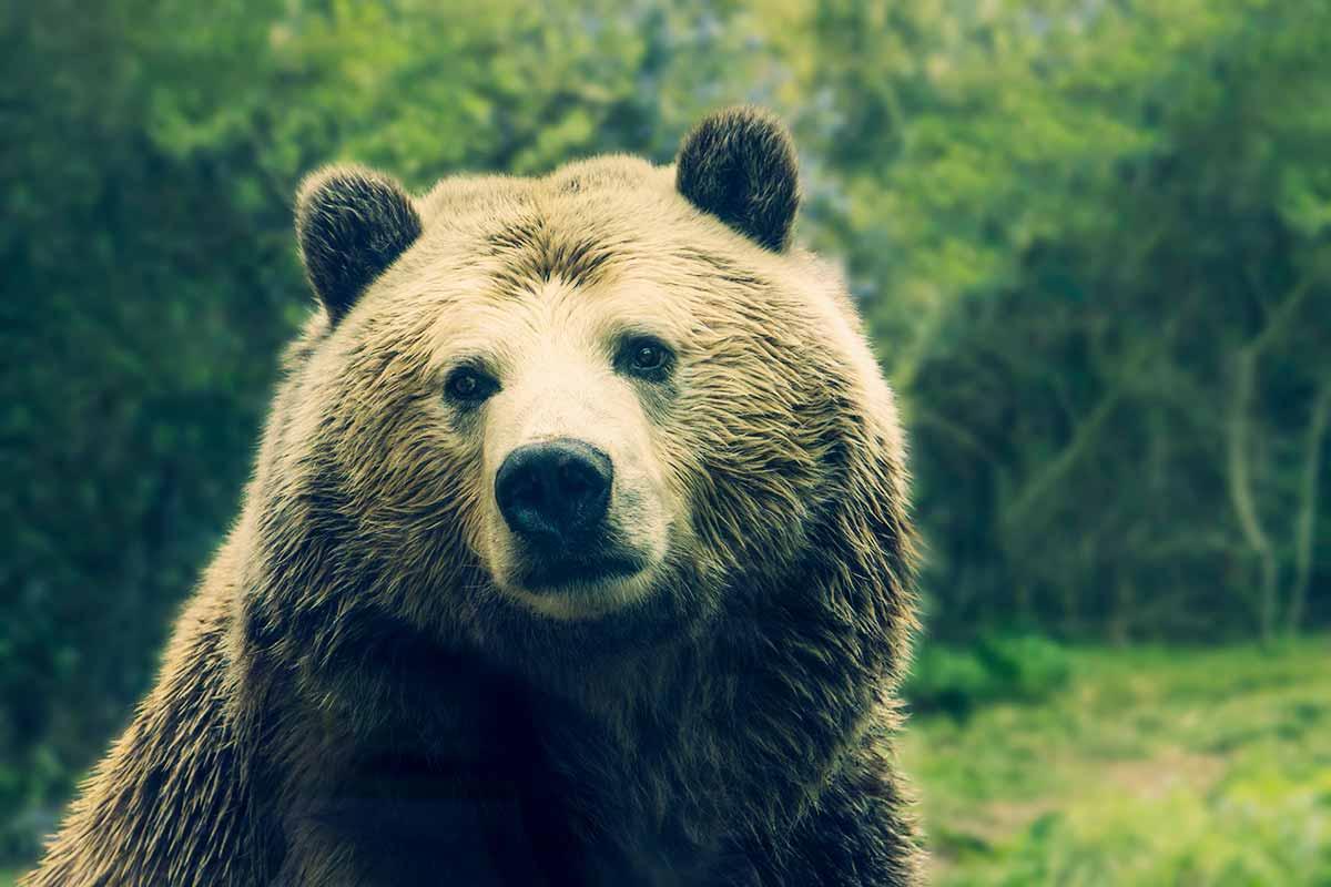 W Bieszczadach można natknąć się na niedźwiedzie